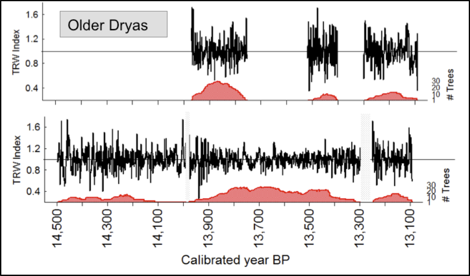 Older Dryas tree-ring records of spruce and larch.